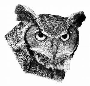 Great Horned Owl Drawing by Scott Woyak