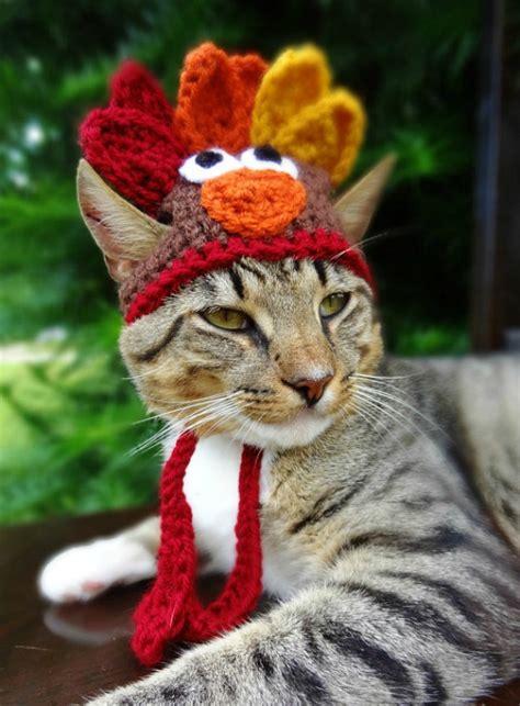 unamused dressed turkeys cats cat turkey dogs