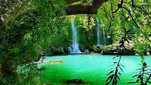 Beauty Green Nature Wallpaper