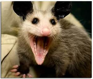 Autism Jabberwocky: Misbehaving Possum Bites Left Brain ...