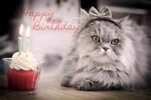 Cute Cats Happy Birthday