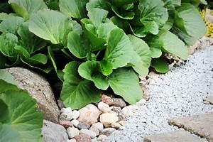Pflanzen Für Nordseite : steingarten auf der nordseite diese pflanzen gedeihen im schatten ~ Frokenaadalensverden.com Haus und Dekorationen