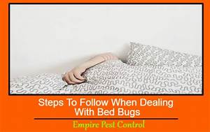 steps to follow when dealing with bed bugs With dealing with bed bugs