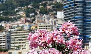 Welche Blumen Kann Man Essen : venusfliegenfalle eine faszinierende pflanze und ihre pflege ~ Watch28wear.com Haus und Dekorationen