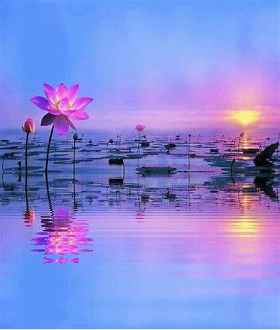 Lake Lotus Gifs Nature Animated Lovethispic Flowers