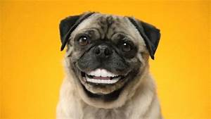 Dog Smiling GIF - Find & Share on GIPHY