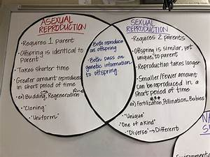 Fun sexual reproduction lesson plans. Asexual Reproduction ...