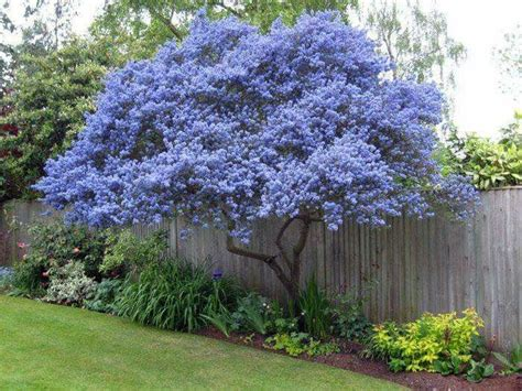 best ornamental trees 71 best images about flowering ornamental trees on pinterest trees firebird and shrubs