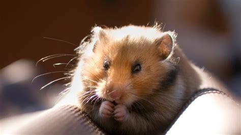 hamster das richtige zubehoer fuer den kleinen nager
