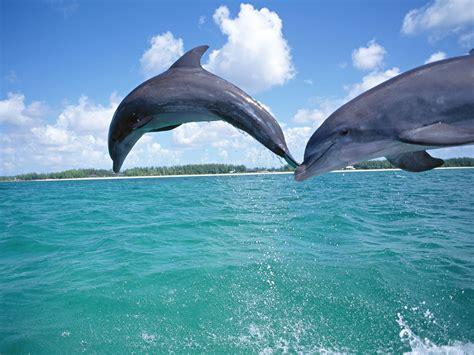 dolphin wallpaper dolphins underwater wallpaper 1920x1440 7702 wallpaperup Underwater