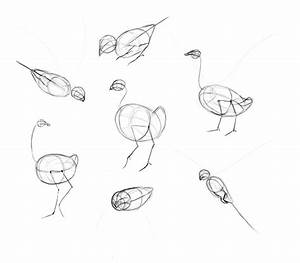 Feather Turning Into Birds Drawing At Getdrawings