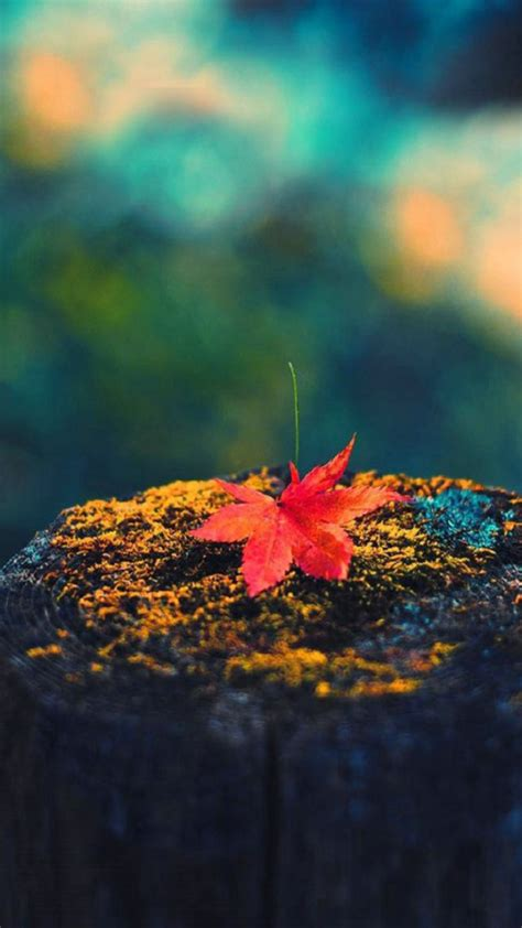 Autumn Wallpapers Iphone 7 by The Best Fall Or Autumn Themed Wallpapers For Iphone 5s