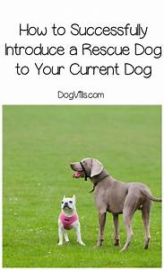 how to introduce a rescue dog to your current dog With how to introduce a puppy to a dog