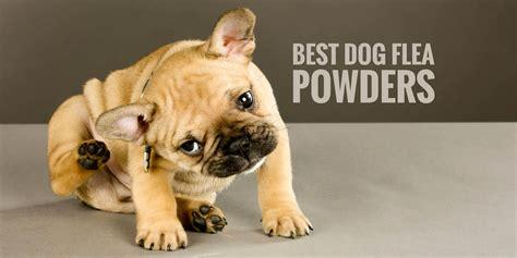 top   dog flea powders  kill lice ticks fleas fast