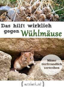 Was Hilft Gegen Wühlmäuse : was tun gegen mause im garten ~ Lizthompson.info Haus und Dekorationen