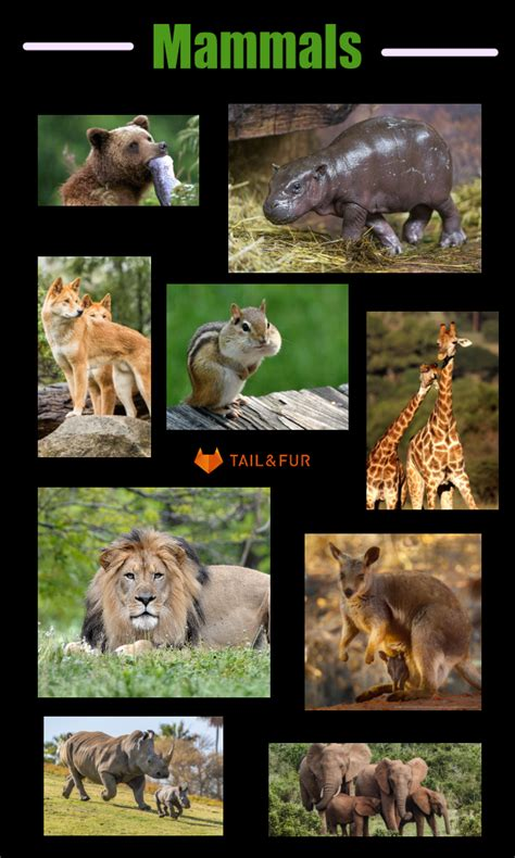 mammals between difference reptiles similarities differences animal basic animals different tailandfur kingdom gone planet