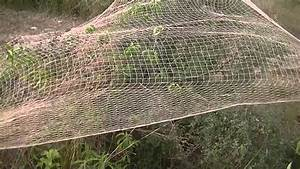Amaizing Partridge Hunting With Net And Pointer