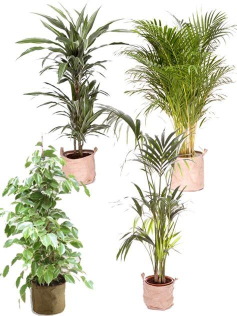 pack cuisine pack 4 grandes plantes vertes dépolluantes d 39 intérieur