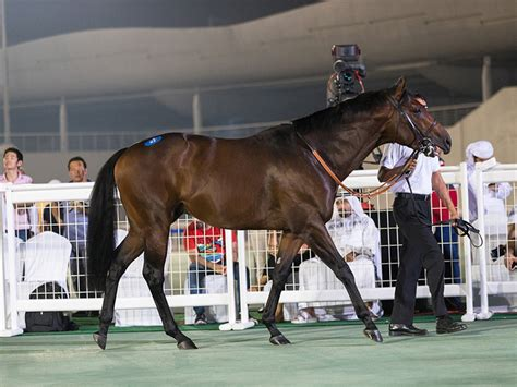 dubai racing horse sold horses worth trenchard aed courtesy credit september lot club