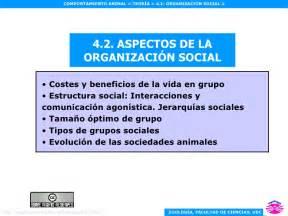 etologiaorganizacion social