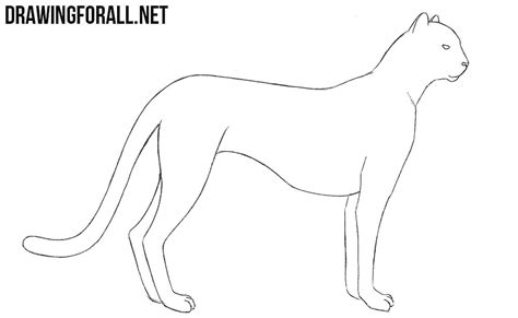 draw  cheetah drawingforallnet