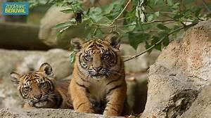 Billet Zoo De Beauval Leclerc : zooparc de beauval visite du zoo de beauval et billets en ligne come to paris ~ Medecine-chirurgie-esthetiques.com Avis de Voitures