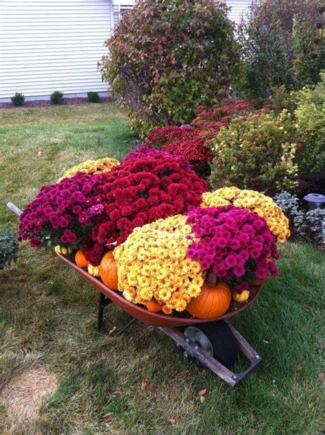Herbstdeko Im Garten by Chrysantheme Im Herbst Wissenswertes Und N 252 Tzliche Tipps