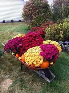 Herbstdeko Für Den Garten : chrysantheme im herbst wissenswertes und n tzliche tipps ~ Lizthompson.info Haus und Dekorationen