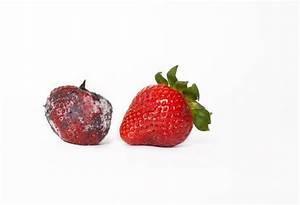 45 best Decomposing produce images on Pinterest | Food art ...