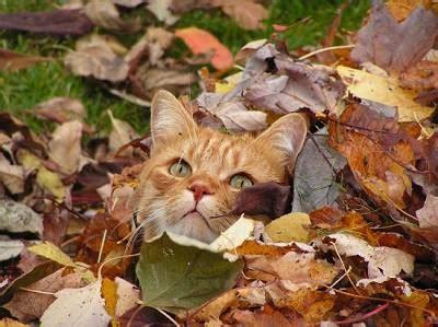 feuille de m駘amine cuisine feuilles et graminées dans un soleil d 39 automne mouillées de rosée m m caligny