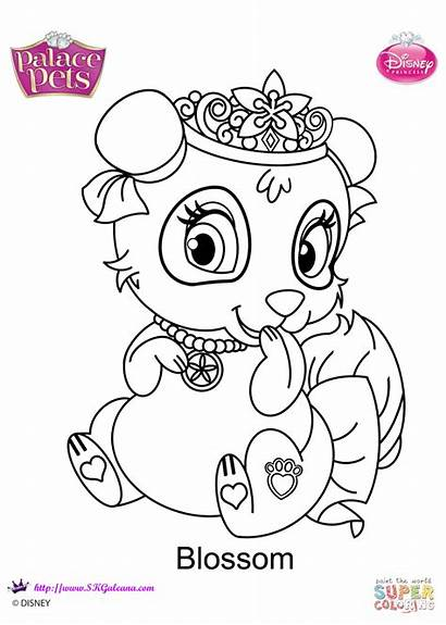 Coloring Pets Palace Pages Blossom Printable Dot