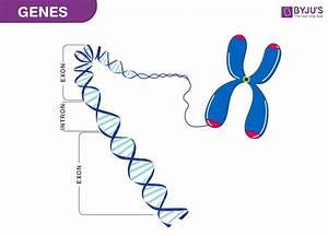 Genetic Makeup Of Humans Vs S