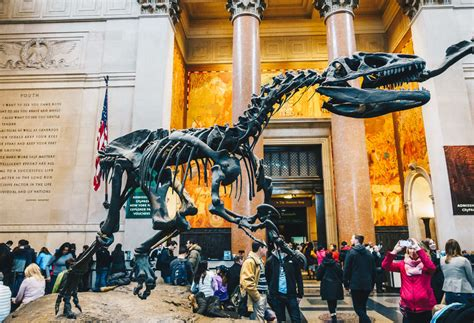 museums  nyc  worth visiting thrillist