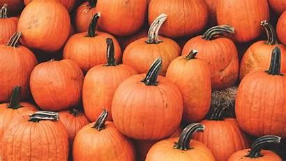 Pumpkin Autumn Harvest October Background 1080p Ripe