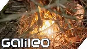 Gehrung Sägen Ohne Hilfsmittel : feuermachen ohne hilfsmittel galileo lunch break youtube ~ Orissabook.com Haus und Dekorationen