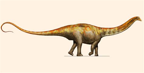 Galeamopus Pabsti New Species Of Long Necked Dinosaur