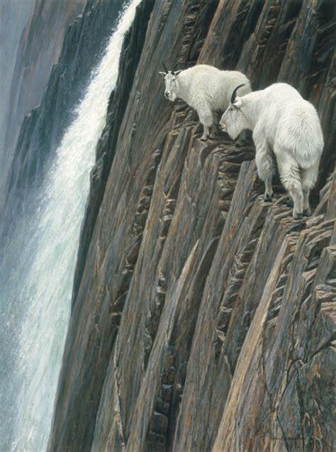 sheer drop mountain goats  wildlife artist robert