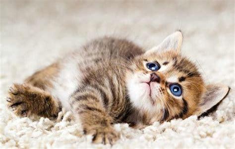 wo finde ich  eine babykatze katze katzen