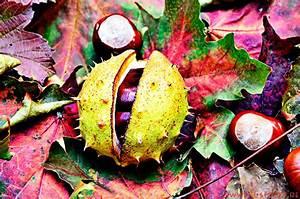 Schöne Herbstbilder Kostenlos : gru karte herbstlaub gr e herbstbilder gl ckw nsche ~ A.2002-acura-tl-radio.info Haus und Dekorationen