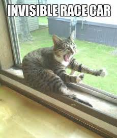 cat cing invisible race car
