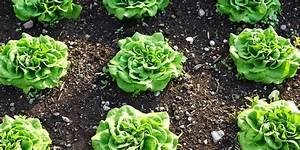 Quel Legume Planter En Septembre : que planter en septembre au potager fiches pratiques du ~ Melissatoandfro.com Idées de Décoration