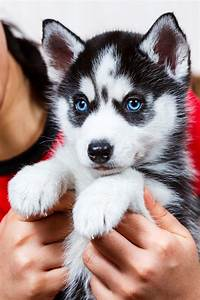 Companion Animal Psychology: Do Dogs with Baby Expressions ...