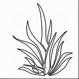 Coloring Pages Plants Seaweed Drawing Plant Underwater Sea Grass Ocean Kelp Shrubs Outlines Colouring Draw Clipart Printable Aquatic Pencil Getdrawings sketch template