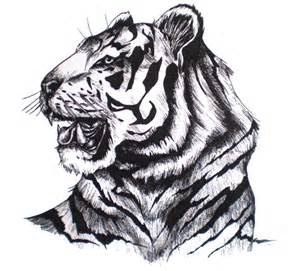 Easy Pen Drawing Tiger