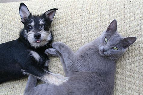 dogs chase cats dog behaviors