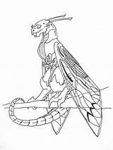 Wyvern Coloring Cicada Template Sketch sketch template