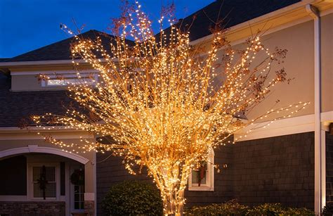 howto wrap christmas lights around tree branches outdoor yard decorating ideas