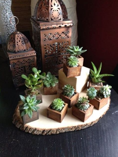 el placer de decorar  suculentas