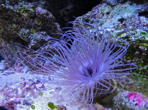 1000+ Images About Undersea Flowersplantslife On