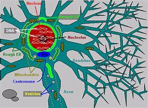 What Is Inside Neurons